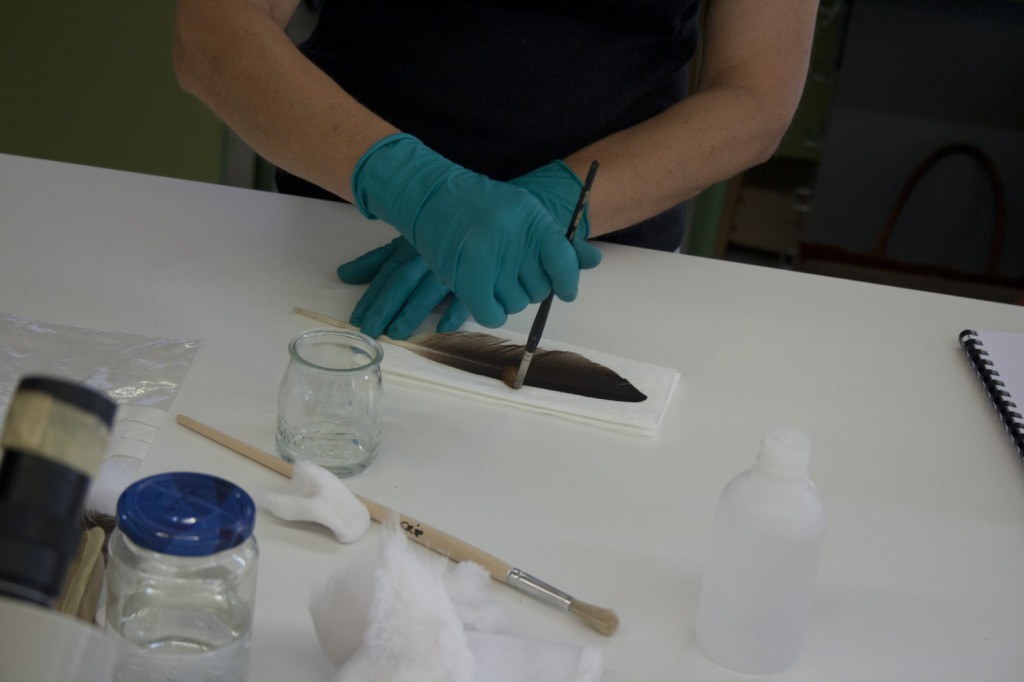 """Cleaning and repair techniques for feathers"" Allyson Rae Specialist in Organic Artifacts Conservation -UK"