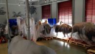 Big animals – Big deal!